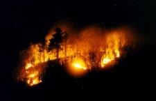 Fogos Florestais9